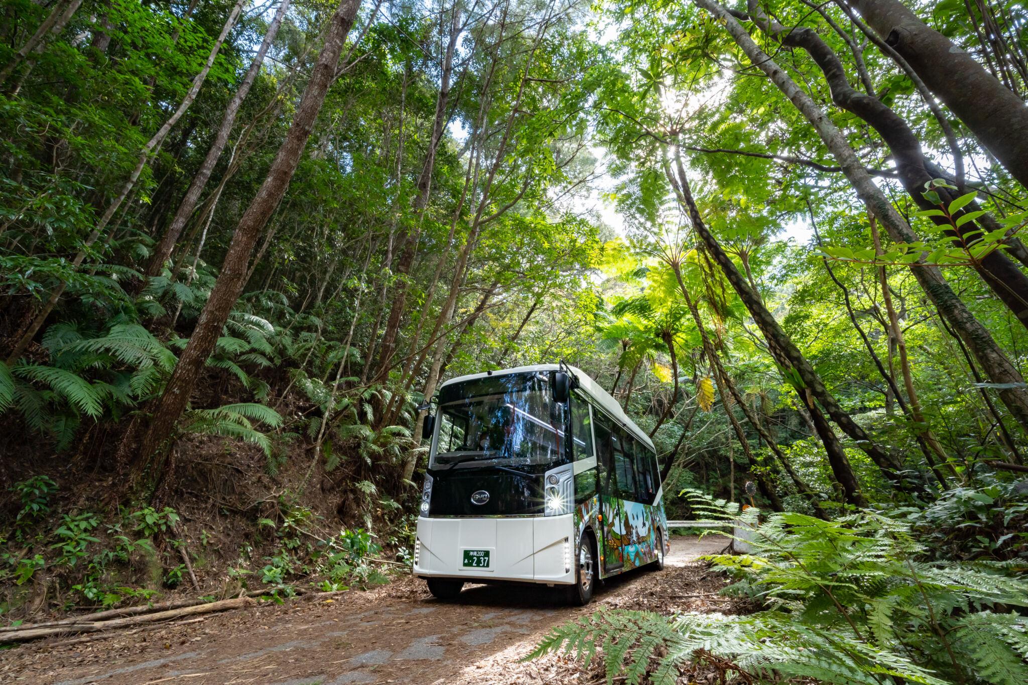世界自然遺産やんばるの森を学べるツアーで地域を元気に